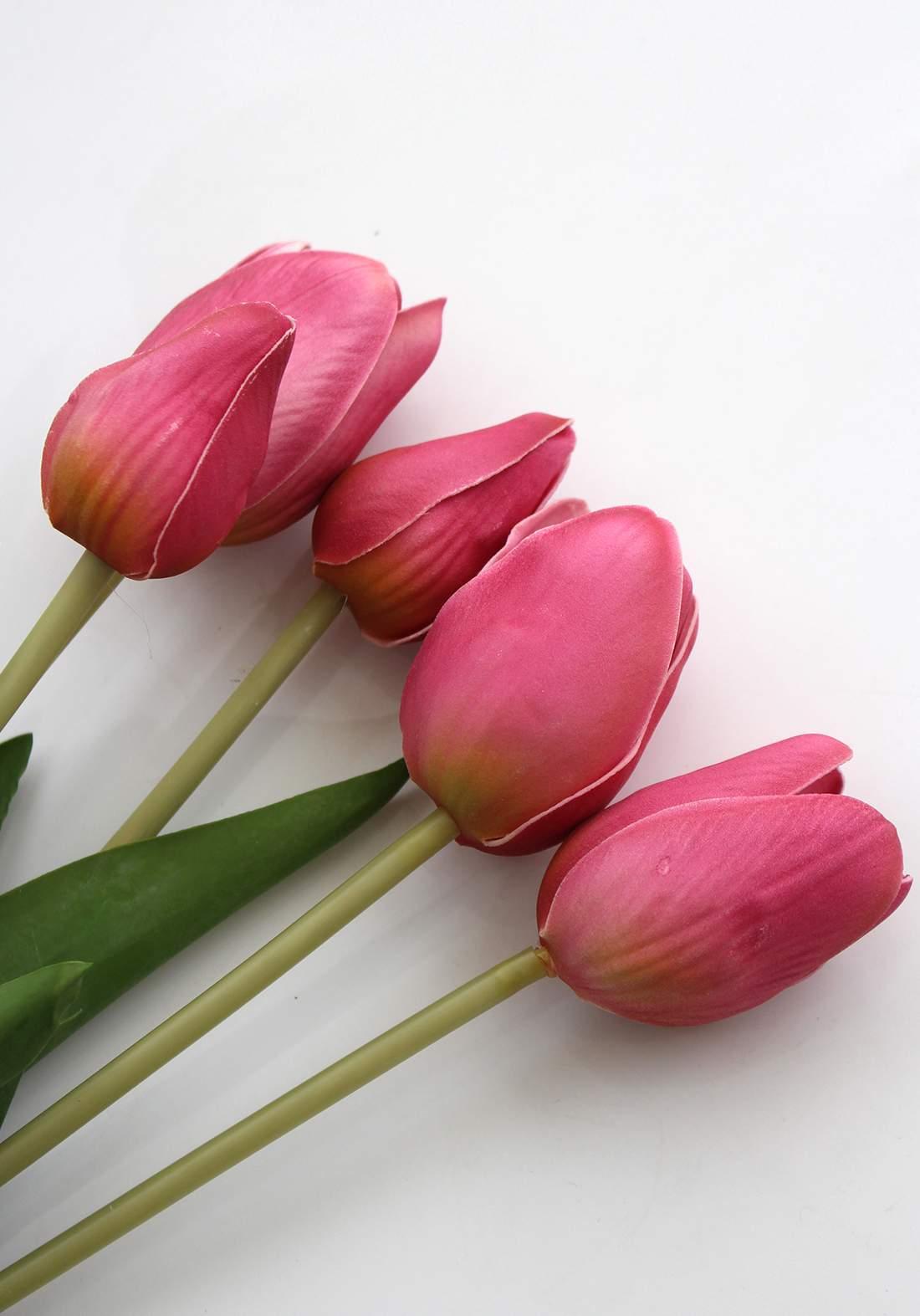 شدة ورد لزهرة التوليب